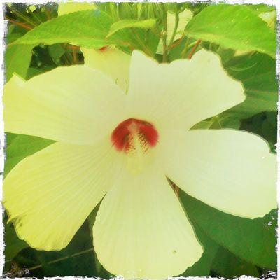 Big-flower