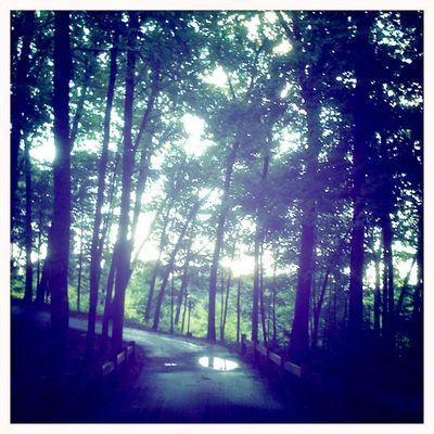 Puddle path
