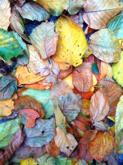 Leaves-sm