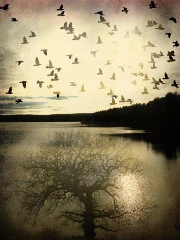 Sunset-migration-small