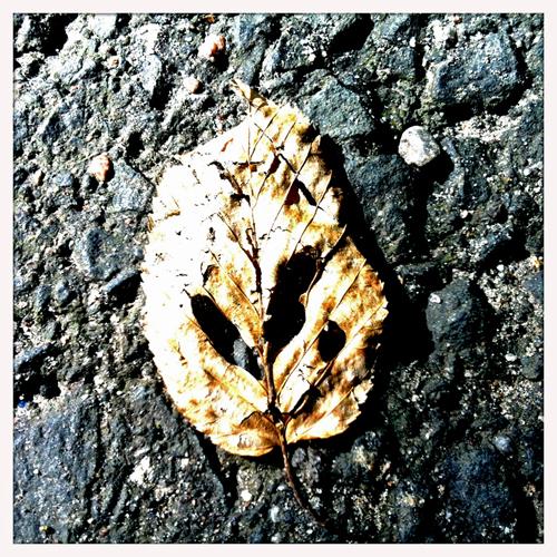 H-leaf-2