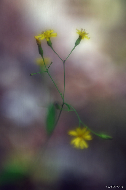 Tiniest flowers